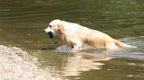 Training am Wasser